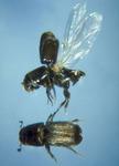 East Texas Forest Entomology Seminar
