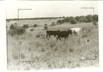 2200-1 Grazing - LBJ National Grasslands