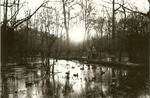 2351.3-05 Duck Hunting Holley Bluff - Davy Crockett National Forest
