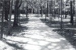 1310 T64-384 APW Soil Cement Trail - Davy Crockett National Forest