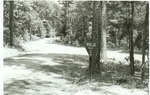 2330-T64-151 Yield Ratcliff Lake Area - Davy Crocket National Forest