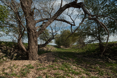 23 Acequia near Mission San Ildefonso, Milam County, Texas